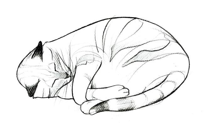 cosplay cat ears